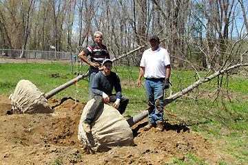 trees-dug