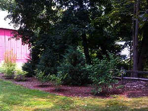 border-garden-summer